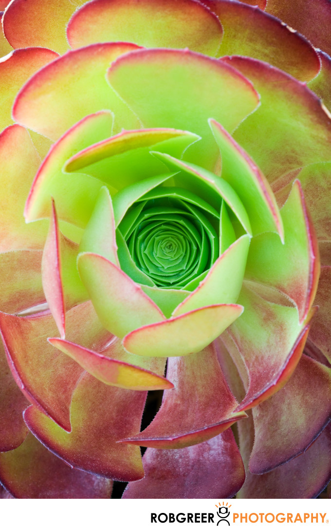 Succulent Center Round Red & Green