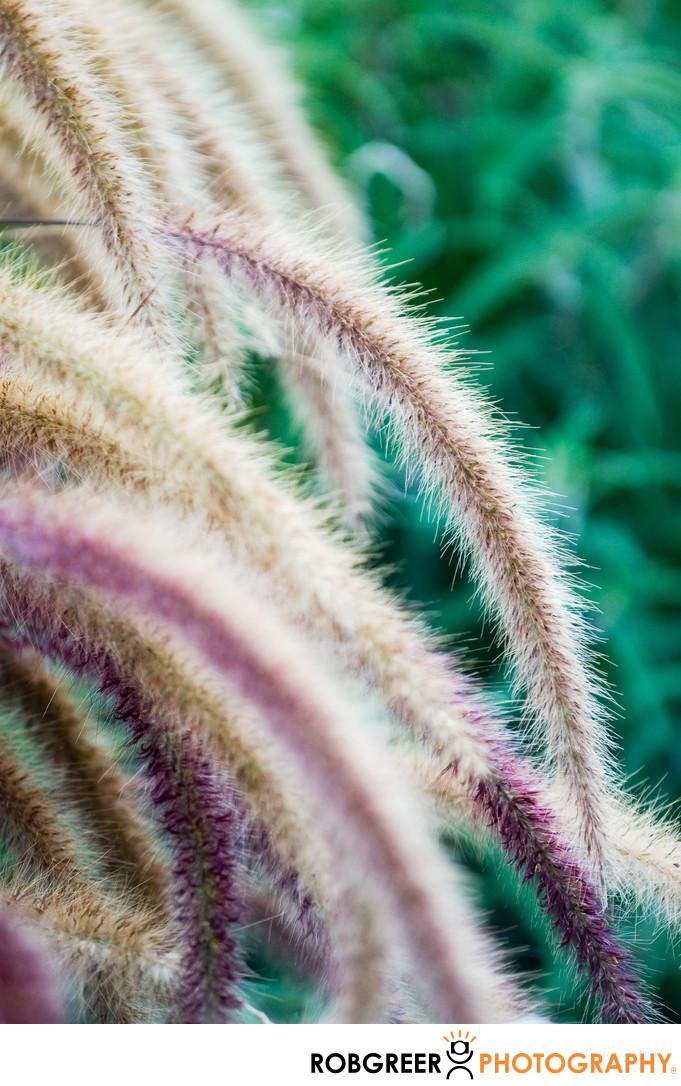 Fuzzy Wuzzy Cattails