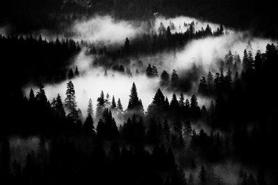 Dark View of Trees & Fog in Yosemite Valley