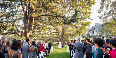 Huge Tree Wedding Processional