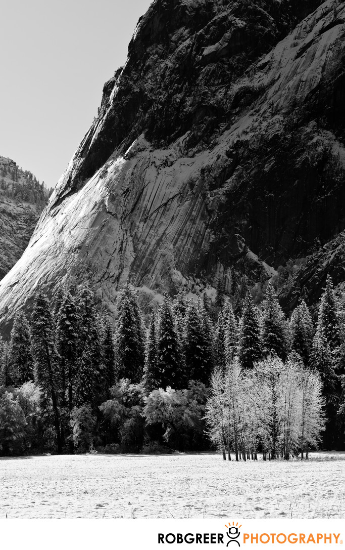 Stand of Lonely Trees in Yosemite Valley