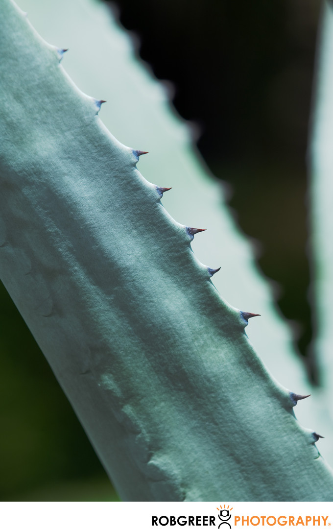Short Spike Detail