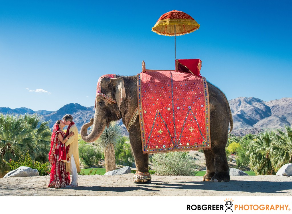 Bride & Groom: Baraat Elephant Portrait