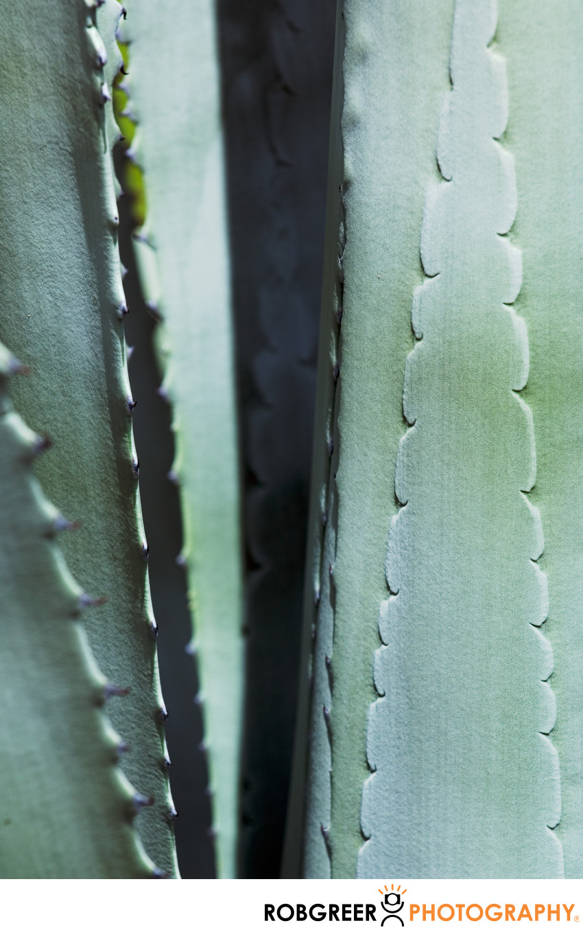 Shapes on Succulents Shadowy Spears